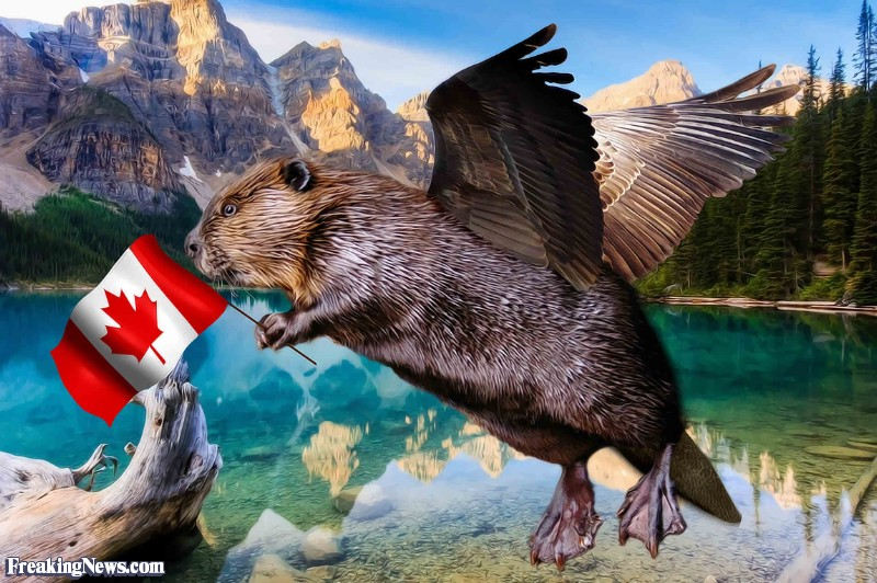 flying-beaver-with-a-canadian-flag-11000