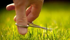 Name:  grass cutt.jpg Views: 3996 Size:  10.1 KB