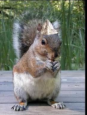 Name:  tinfoilhatsquirrel.jpg Views: 4494 Size:  34.6 KB